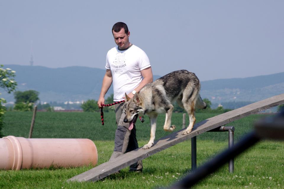Dobře izolovaná bouda pro psa