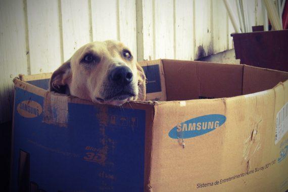 Image Comment choisir une niche pour chien