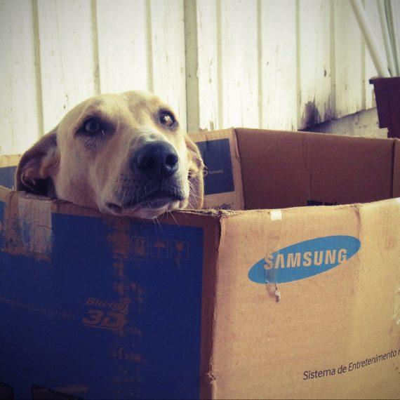 Comment choisir une niche pour chien