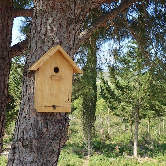 Was sollten Sie über Vogelhäuser wissen