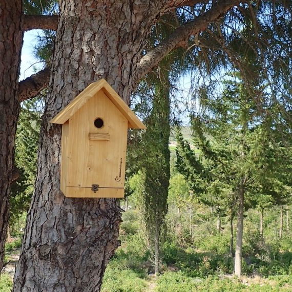 What you should know about birdhouses