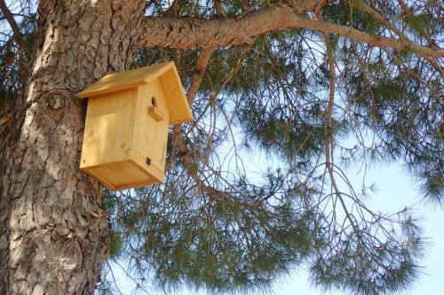 Nichoir pour les petits oiseaux